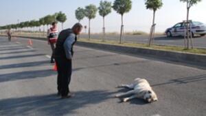 Yaralı köpek jandarmayı seferber etti