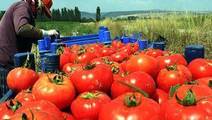 Yetkin: Gıda ihracatı yara alır