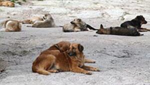Hayvanseverler mezarlık istiyor