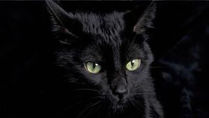 Şok iddialar: Trabzonspor kara kedi avlayıp, hocaya flama okuttu