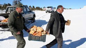 Yaban hayvanları için doğaya ekmek