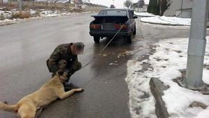 Otomobilin arkasına bağlanan kangal görenleri şoke etti