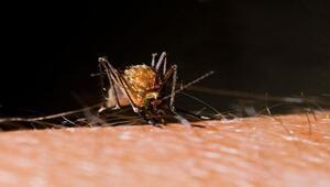 'Zika'yı bulaştıran Aedes cinsi Türkiye'de var'