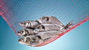Balık tanıtım atağı Türkmenistan'dan başlıyor