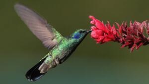 Tropik kuşların rengarenk olmalarının sebebi nedir?