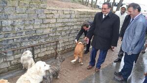 Kaymakam Atlamaz, Büyükşehir Belediyesi Hayvan Barınağına Övgü Yağdırdı