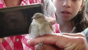 Göçmen Kuşları Haberleri Son Dakika Güncel Göçmen Kuşları Gelişmeleri