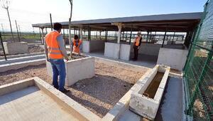 İzmirde barınak ve 4 bin kapasiteli hayvan mezarlığı kurulacak