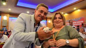 En güzel Ankara kedisi Pamuk seçildi