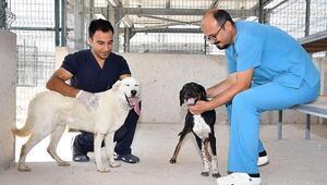 İzmirin ilk hayvan mezarlığı hazır