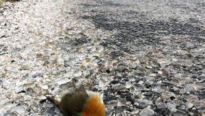 Karayollarındaki araçlar kuşlar için büyük tehdit