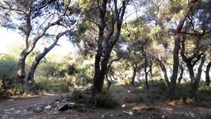 Obruk Ormanı Muratpaşanın