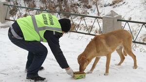 Büyükşehirden sokak hayvanlarına yiyecek