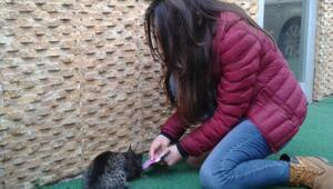 Öğrencilerden sokak hayvanlarına yardım