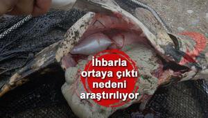 Porsuk Çayında toplu balık ölümleri araştırılıyor