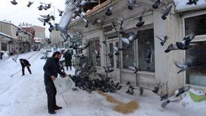 Ardahanlı esnaf güvercinleri besledi