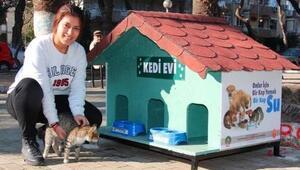Ödemişte belediyeden kedi evi