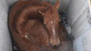 Düştüğü kuyuda mahsur kalan at kurtarıldı