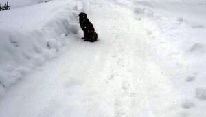 Boluda soğuk ve açlıktan bitkin düşen 4 köpek barınağa alındı