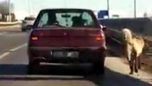 Köpeği otomobile bağlayıp götüren sürücüye para cezası