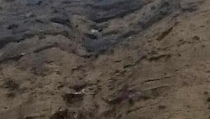 Kayalıklarda mahsur kalan keçi itfaiyenin çalışmasıyla kurtuldu