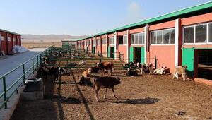 Hayvancılık yatırımlarına KOP desteği