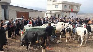 Kilis'te, 45 aileye 180 hayvan dağıtıldı