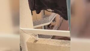 KKTC'de köpeğe dayak vahşeti kamerada