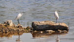 Buldan Yayla Gölüne Kuşlar Sizi Çağırıyor