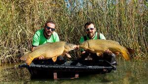 Koca koca balıkları tutup tekrar göle bırakıyorlar