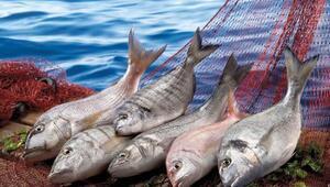 Ev kadınlarının menüsüne balığı sokacaklar