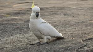 5 asgari ücret fiyatında papağan