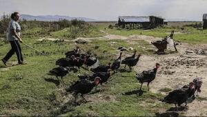 FAO: İklim değişikliğine uyumun kazancı kayıplarından fazla