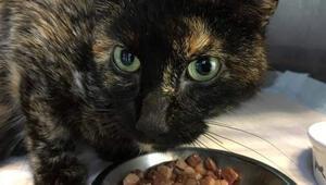 Hollandalı kedi, evinden 950 kilometre uzakta bulundu