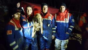 TTK ekibi Kuyuyu yılan yakalama aparatıyla kurtardı