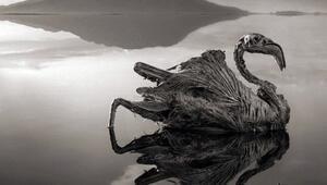 Ölü hayvanları heykel gibi donduran göl