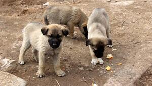 Sokak köpekleri korumaya alındı