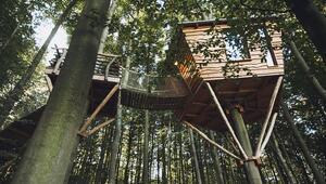 Dünyanın en huzurlu oteli: Robin's Nest Treehouse Hotel