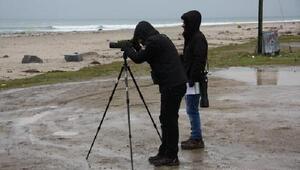 Kırklareli'nde kış ortası su kuşu sayımları başladı