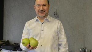 Türkiyede yılda 500 bin ton elma çöpe gidiyor