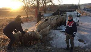 Elazığ'da çalınan 40 koyun Diyarbakır'da bulundu
