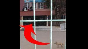 5 çocuk pitbull korkusu yüzünden okulun balkonuna tırmandı