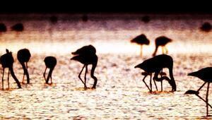 Flamingolardan görsel şov