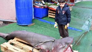 Marmara Denizinde 3 metrelik köpek balığı yakalandı