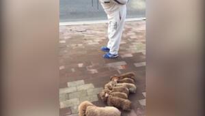Sevimli köpeklere öyle bir şey yaptırdı ki...