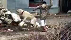 İşkence yapılan köpeğe el konulup sahiplendirildi