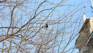 Ağaçta asılı kalan güvercini itfaiye kurtardı