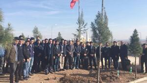 Şehit Günak'ın mezarına ziyaretçi akını