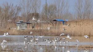 Tarım arazileri kuş cennetine döndü