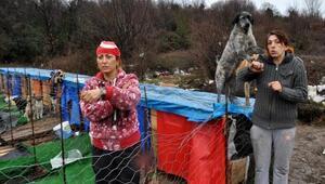 Çöplükte yaşayan sokak köpekleri için barınak yaptılar